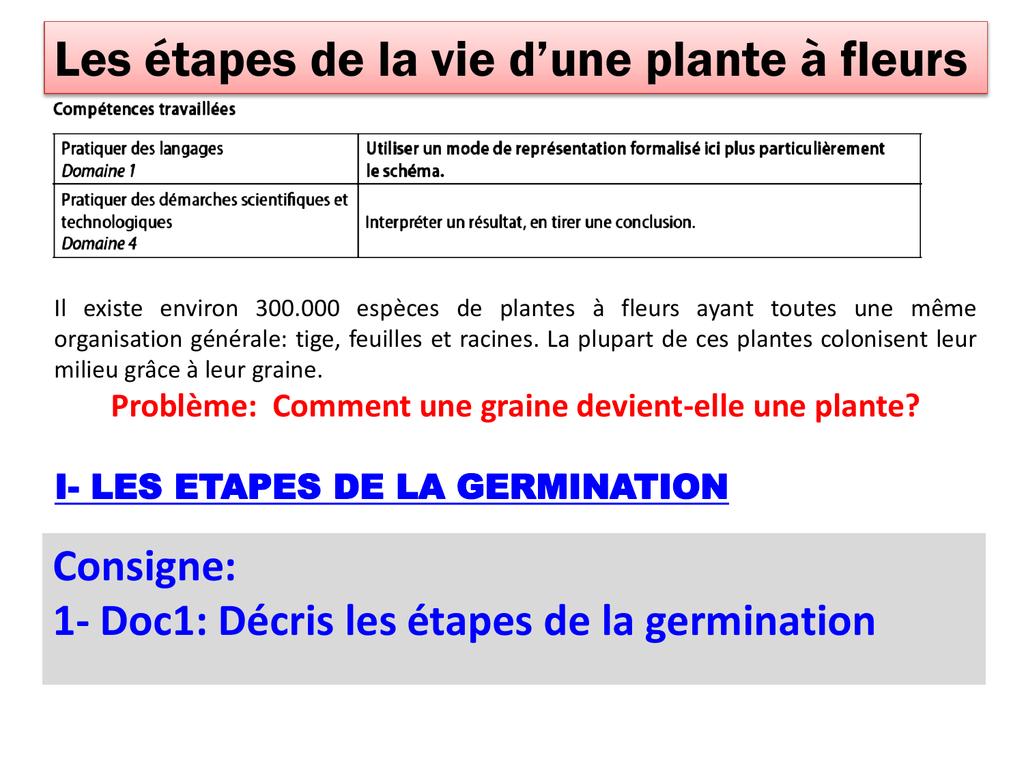 1- Doc1: Décris Les Étapes De La Germination encequiconcerne Schéma D Une Fleur