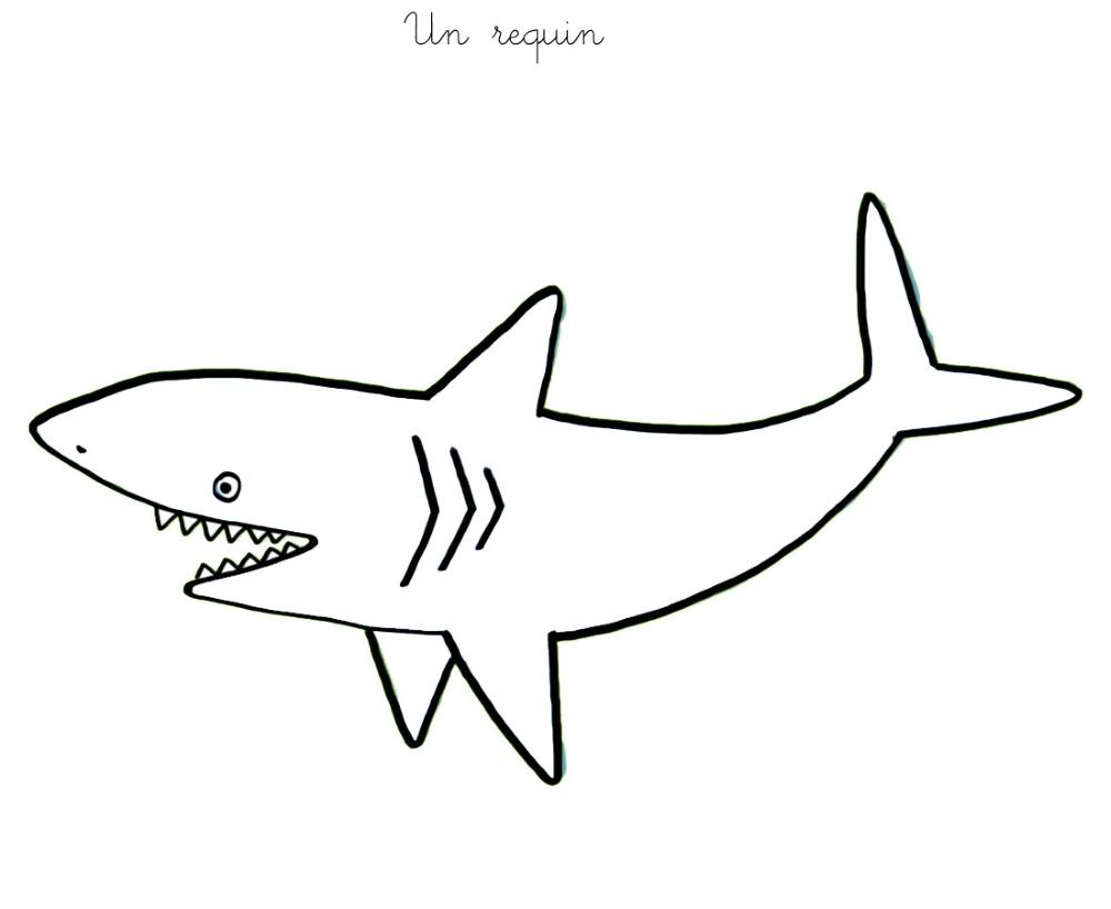 122 Dessins De Coloriage Requin À Imprimer dedans Coloriage Requin Blanc Imprimer