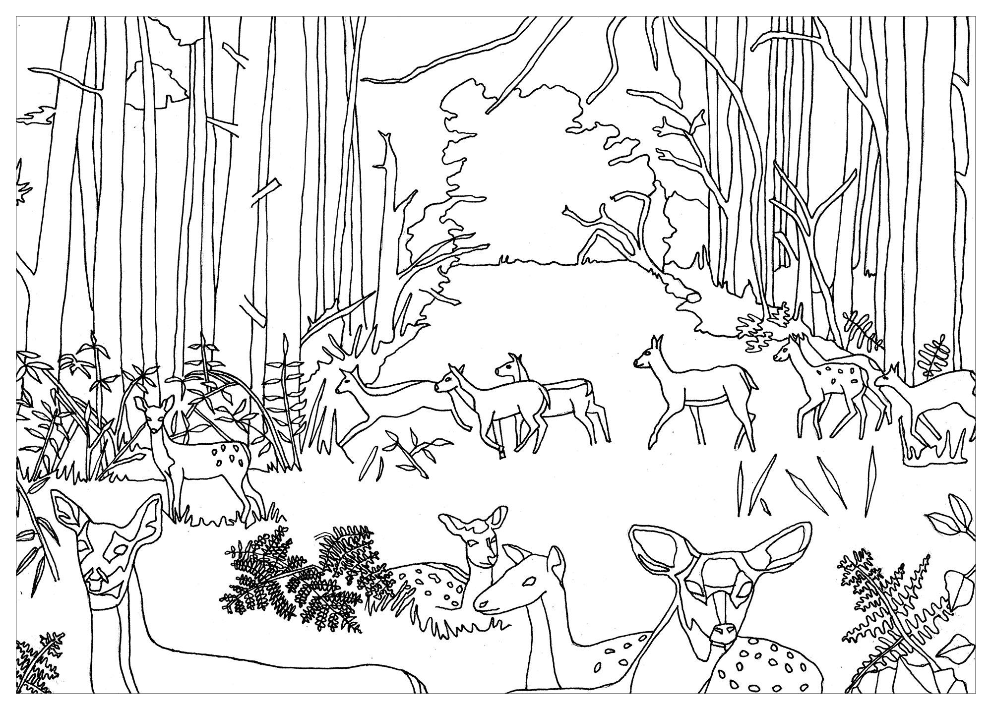 33 Dessins De Coloriage Forêt À Imprimer dedans Dessin De Foret