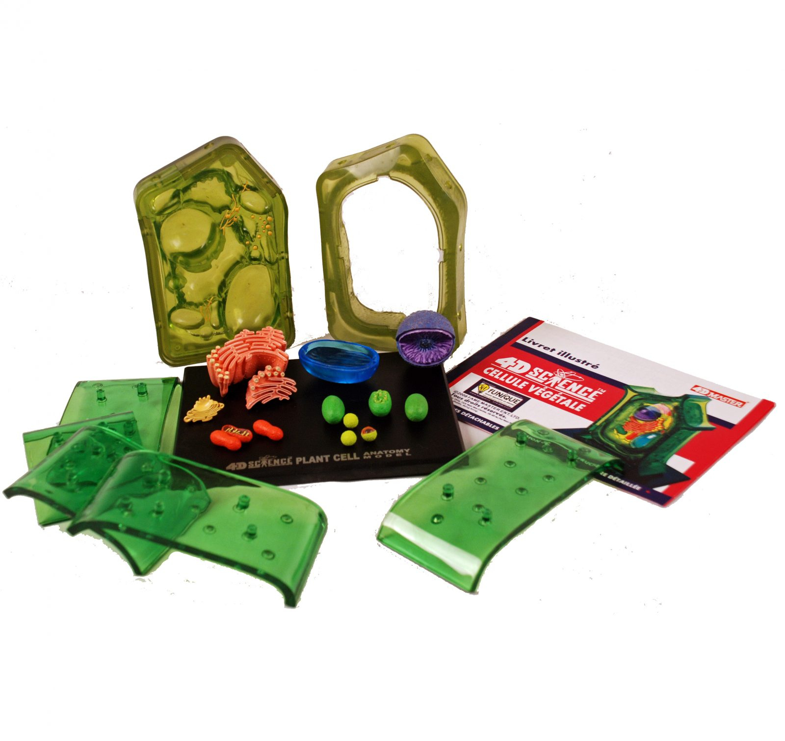 3D Cell Models With Detachable Parts - Animal Cell And Plant Cell - 4D  Puzzle avec Puzzle 5 Ans En Ligne
