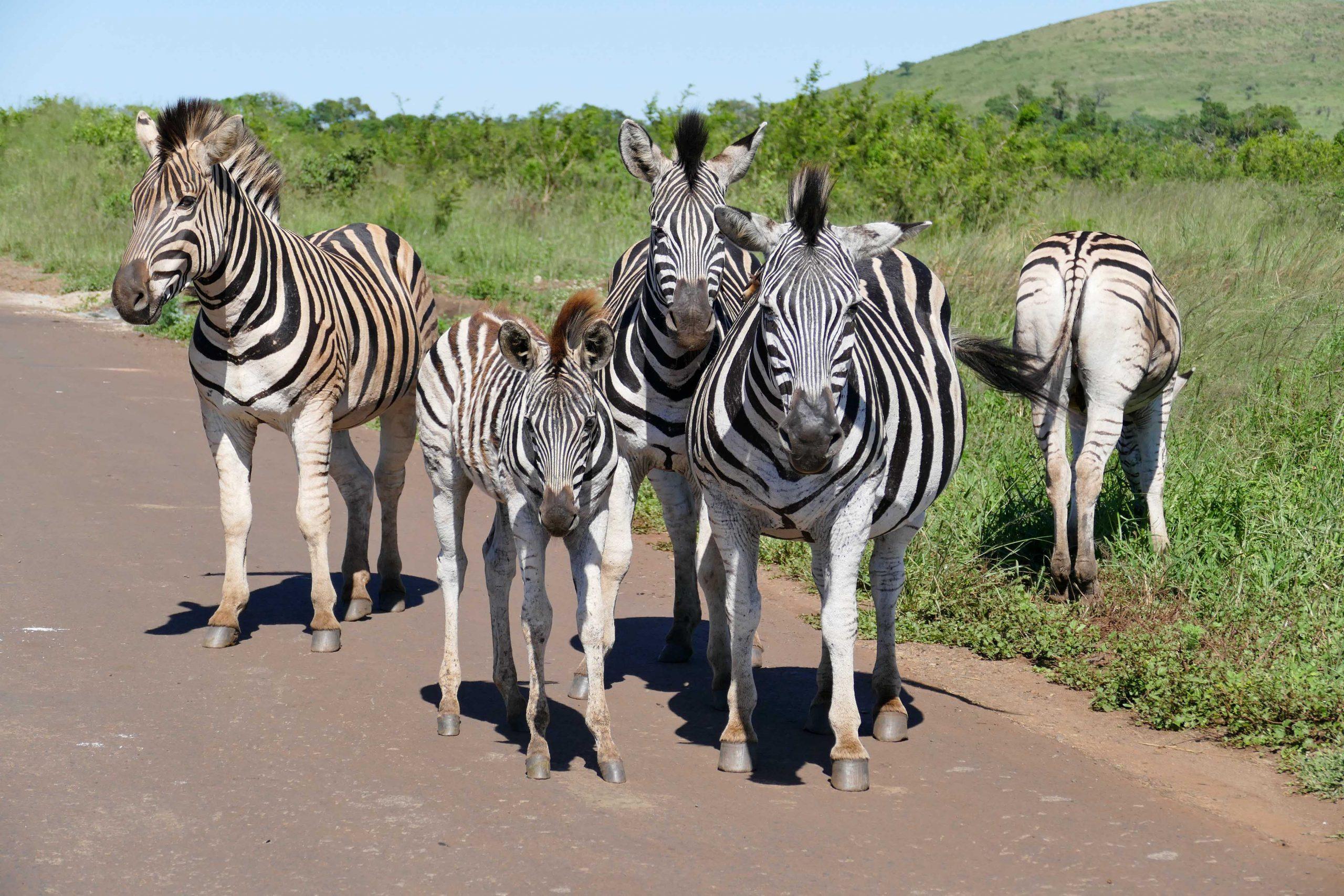A La Rencontre Des Animaux Sauvages En Afrique Du Sud concernant Les Animaux De L Afrique