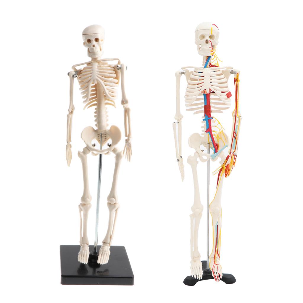 Accessoire - Piece Detachee Jeu Scientifique Statue De concernant Jeux De Squelette Gratuit