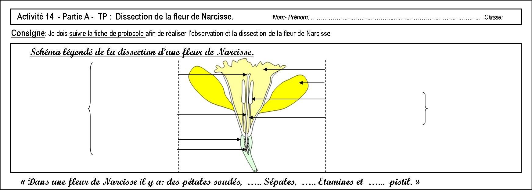 Activité 14 Et Activité 15 (= Dm ) - Svt - Collège Condorcet dedans Schéma D Une Fleur