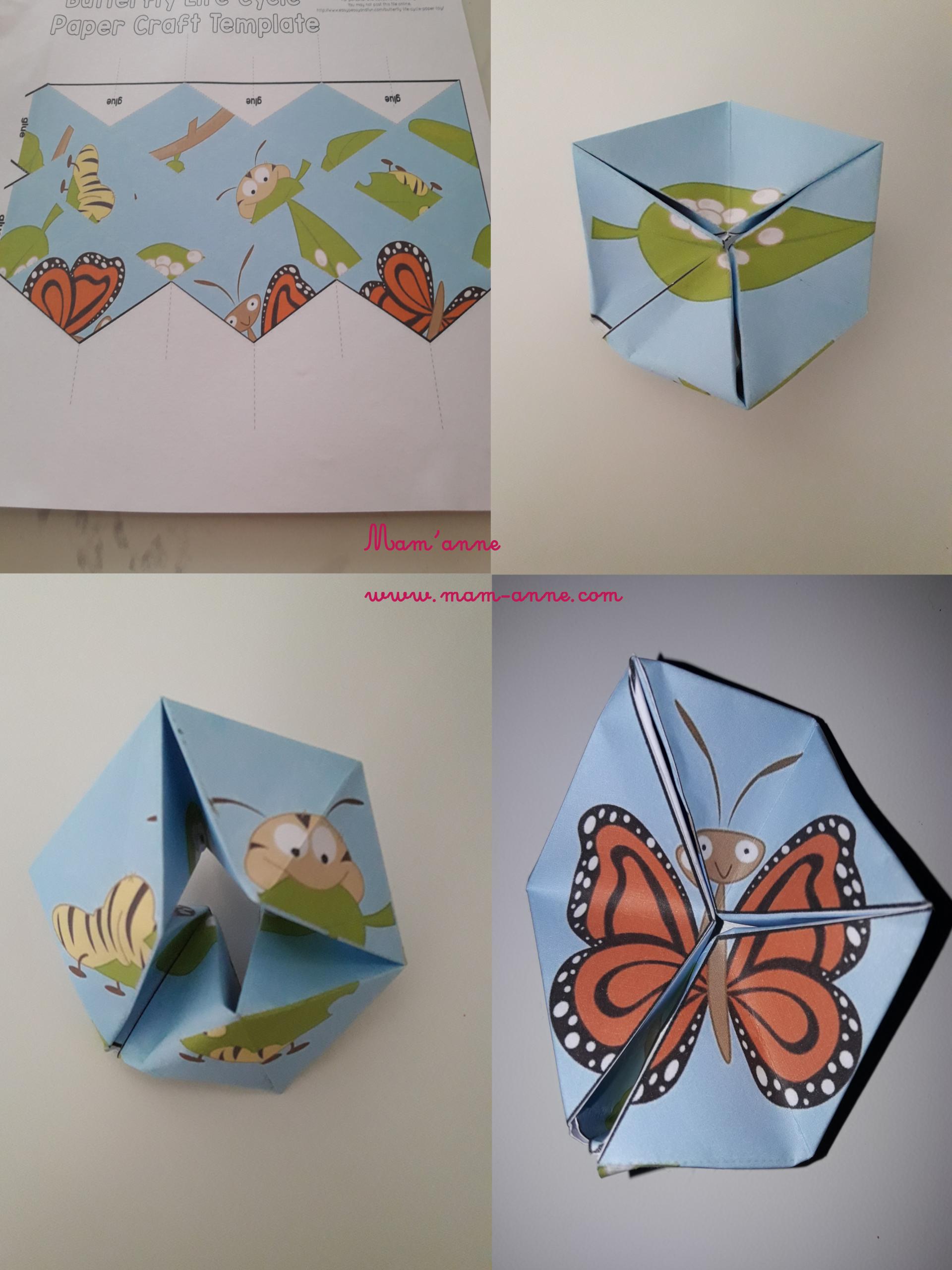 Activité: Cycle De Vie Du Papillon En Flextangle - *mam'anne dedans Cycle De Vie D Une Chenille