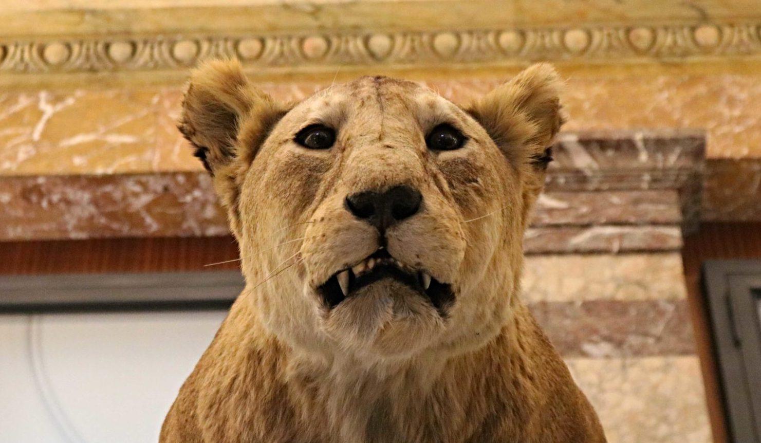 Africa Museum : Le Musée D'afrique De Tervuren - Vivre À encequiconcerne Les Animaux De L Afrique