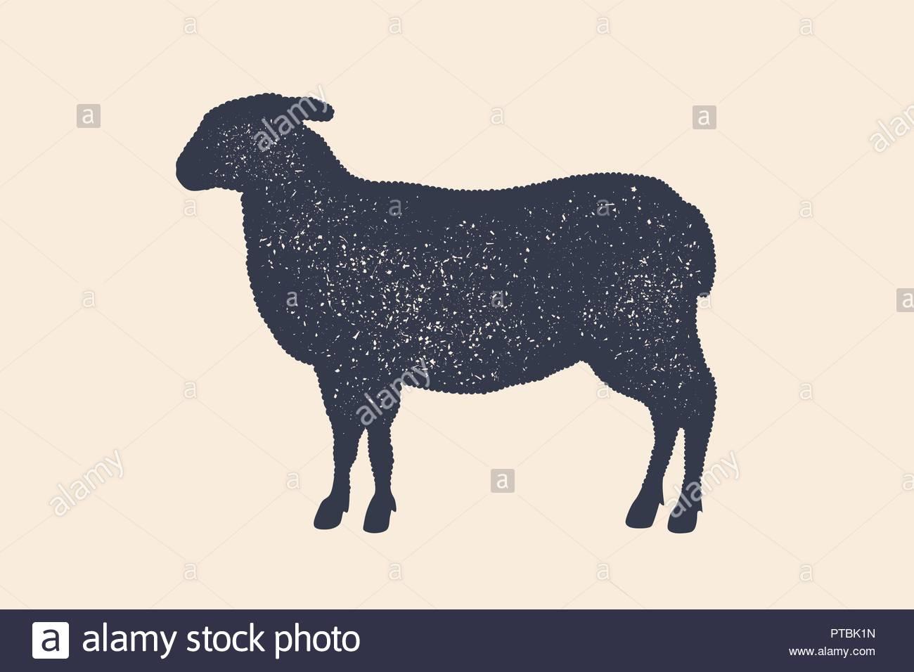 Agneau, Mouton. Logo Vintage Retro, Imprimer, Poster Pour à Photo De Mouton A Imprimer