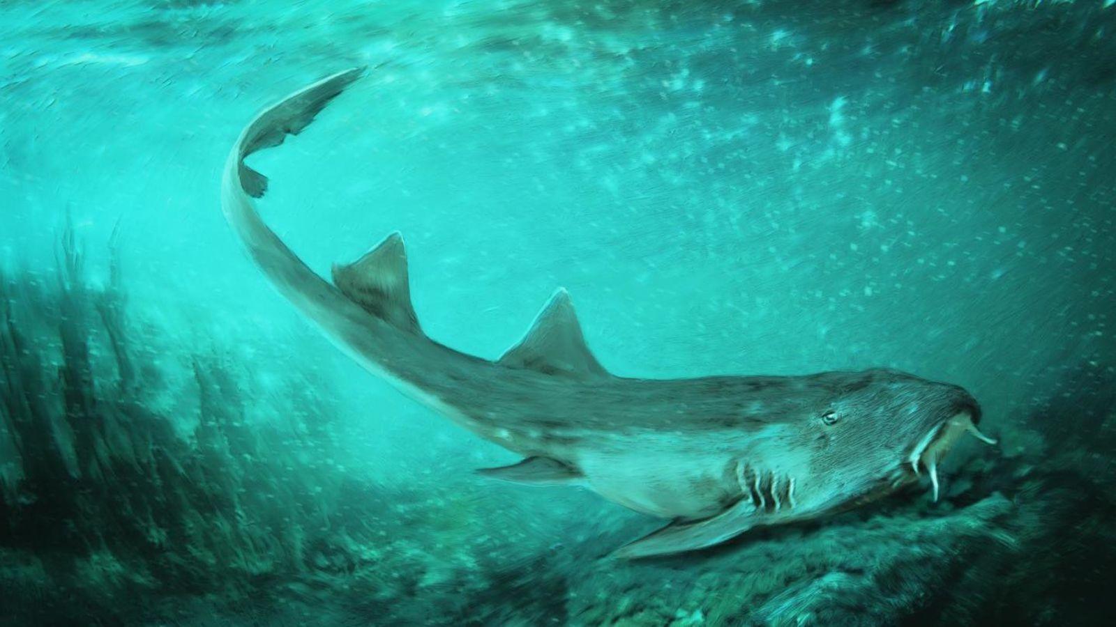 Ancien Requin Avec Des Dents En Forme De Vaisseau Spatial intérieur Requin Jeux Video