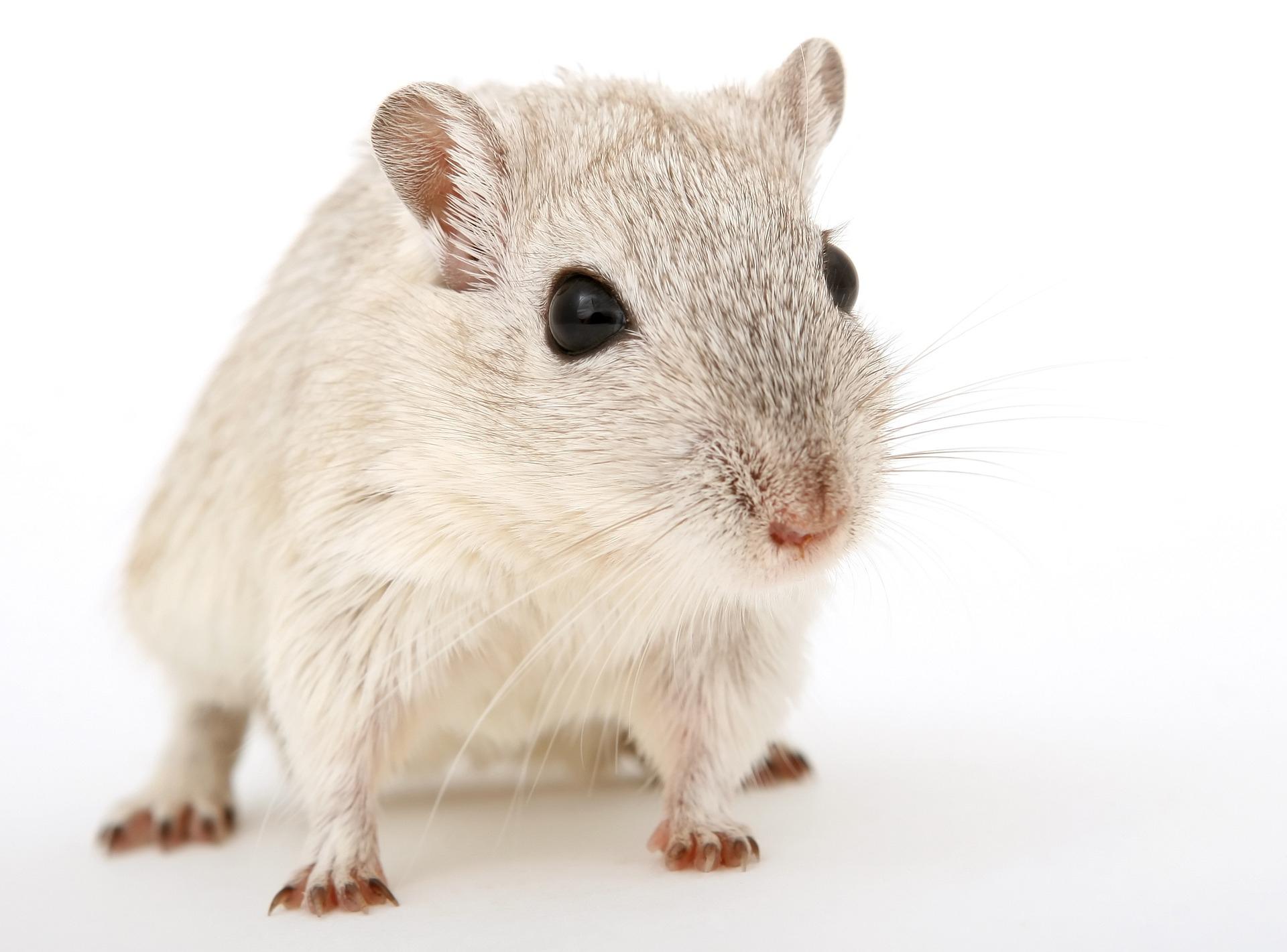 Animal-1238239_1920 - La Fondation Droit Animal, Ethique Et encequiconcerne Les Animaux Qui Hivernent