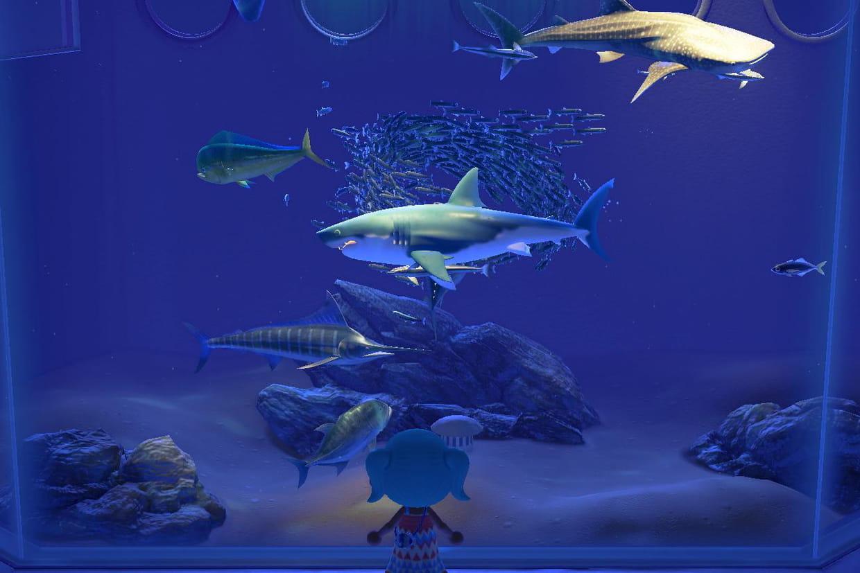 Animal Crossing New Horizons : Comment Attraper Un Requin ? avec Jeu De Societe Requin