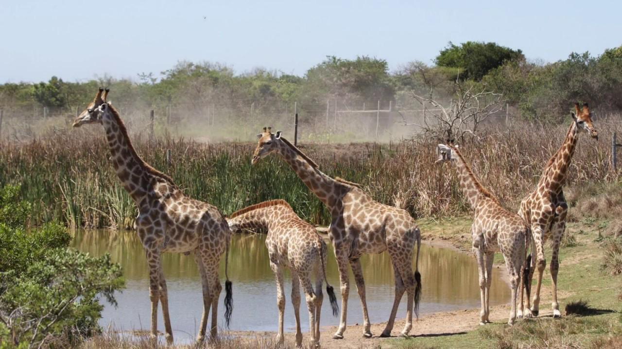 Animaux Afrique Du Sud - serapportantà Les Animaux De L Afrique