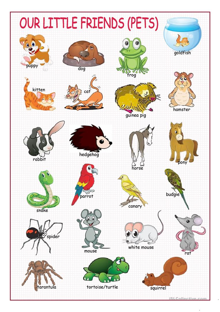 Animaux Familiers-Pets – My-Teacher.fr : Apprendre L'anglais tout Apprendre Le Nom Des Animaux