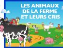 Apprendre Les Animaux De La Ferme Et Leurs Cris (Fr) - Jeu pour Apprendre Les Animaux Jeux Éducatifs