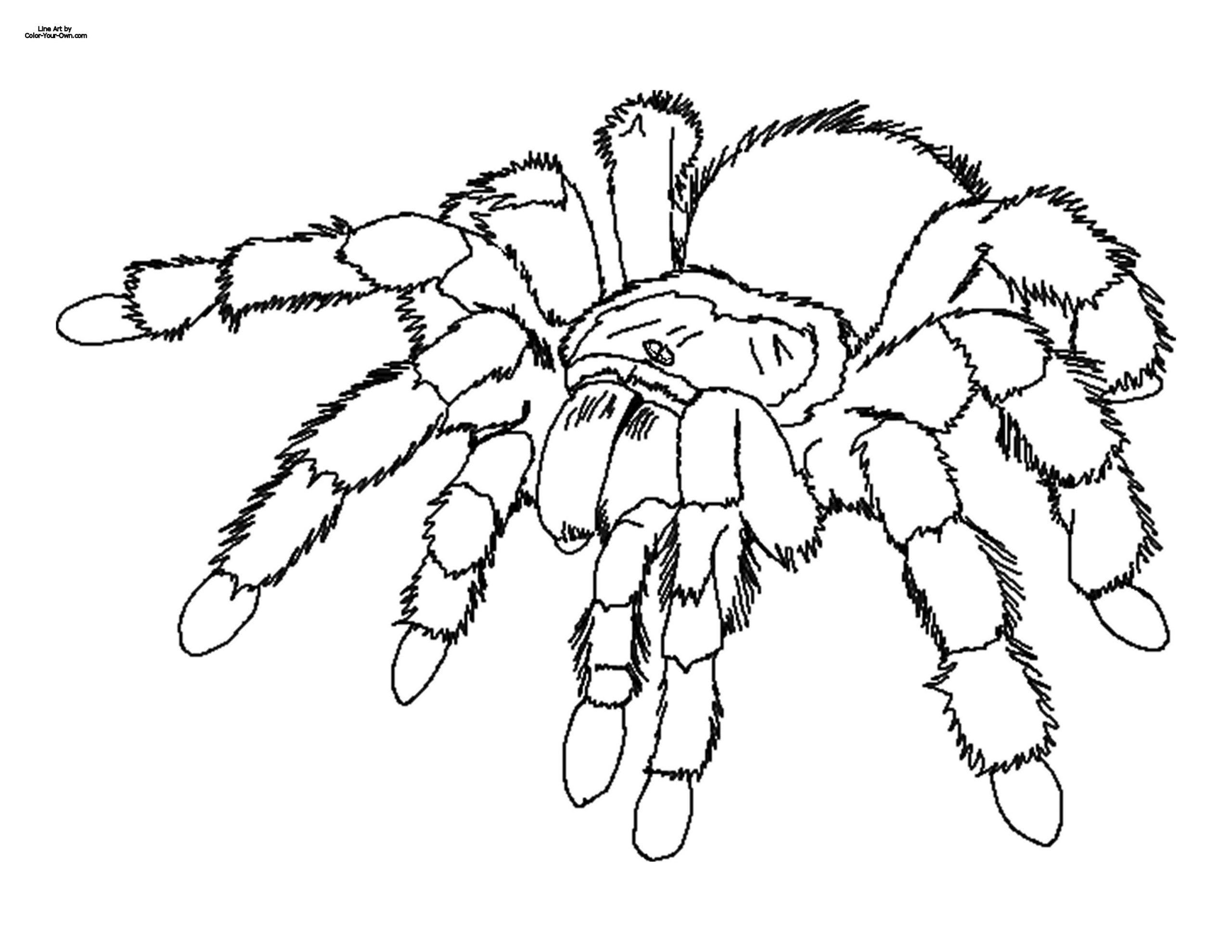 Araignée #24 (Animaux) – Coloriages À Imprimer tout Dessiner Une Araignee