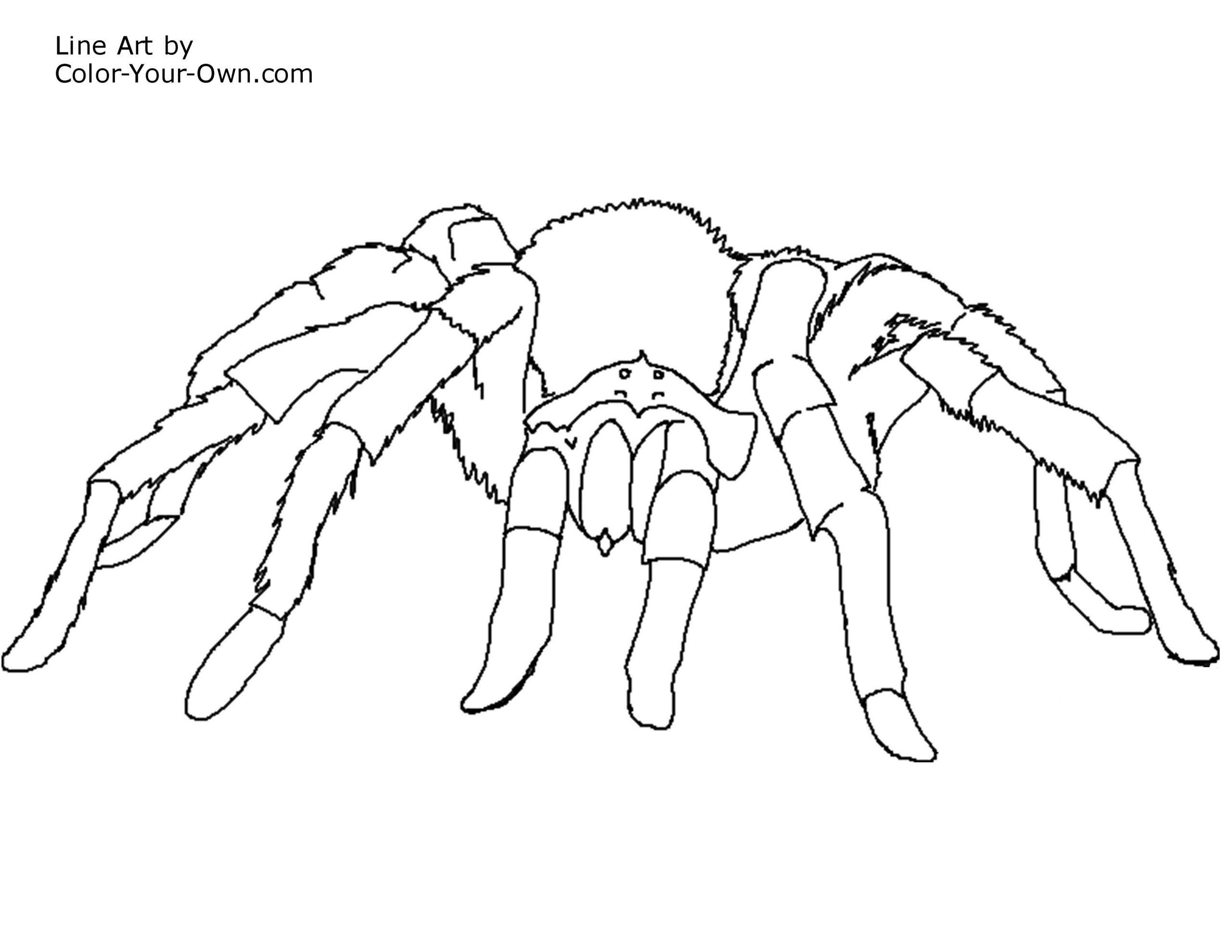 Araignée #35 (Animaux) – Coloriages À Imprimer dedans Dessiner Une Araignee