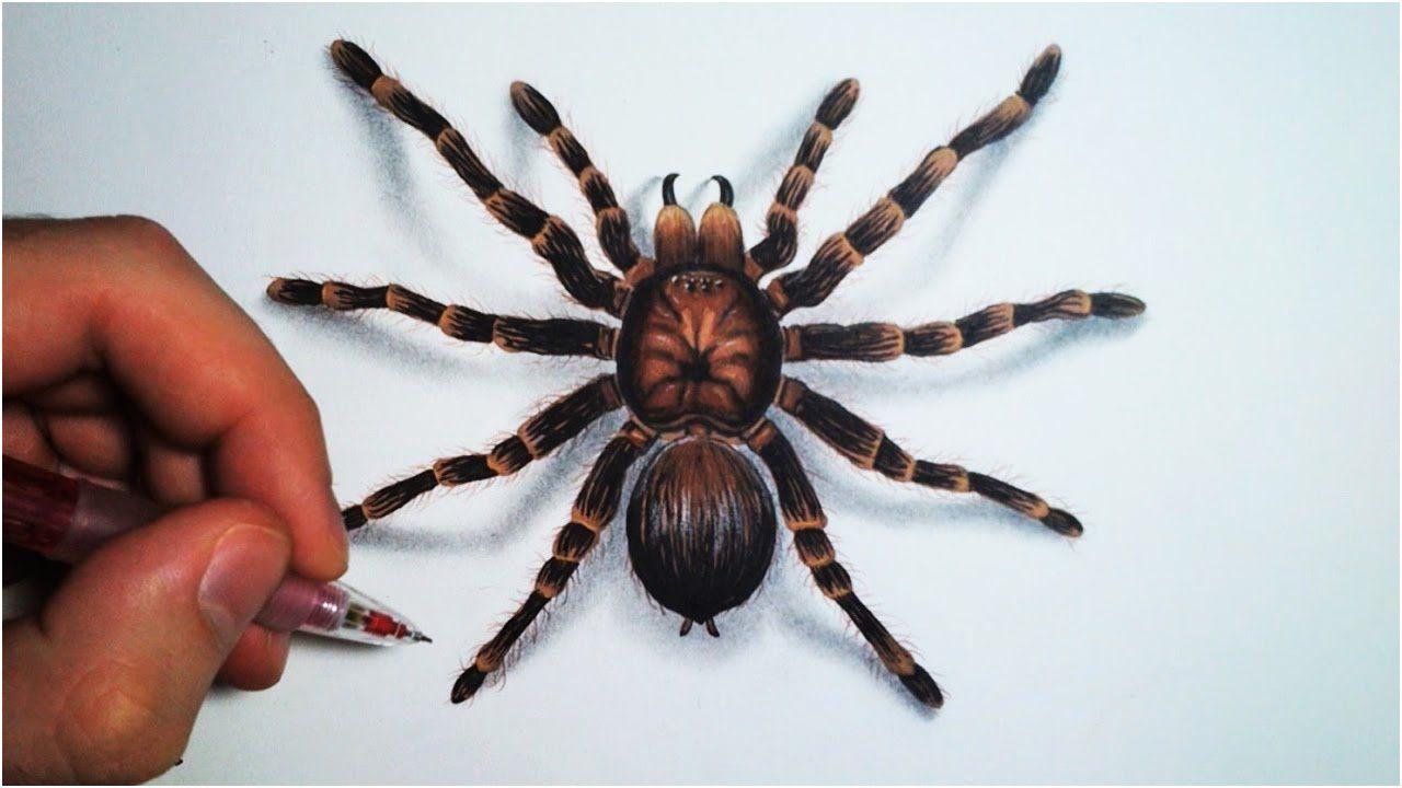 Araignée Coloriage . 11 Incroyable Araignée Coloriage Pics concernant Dessiner Une Araignee