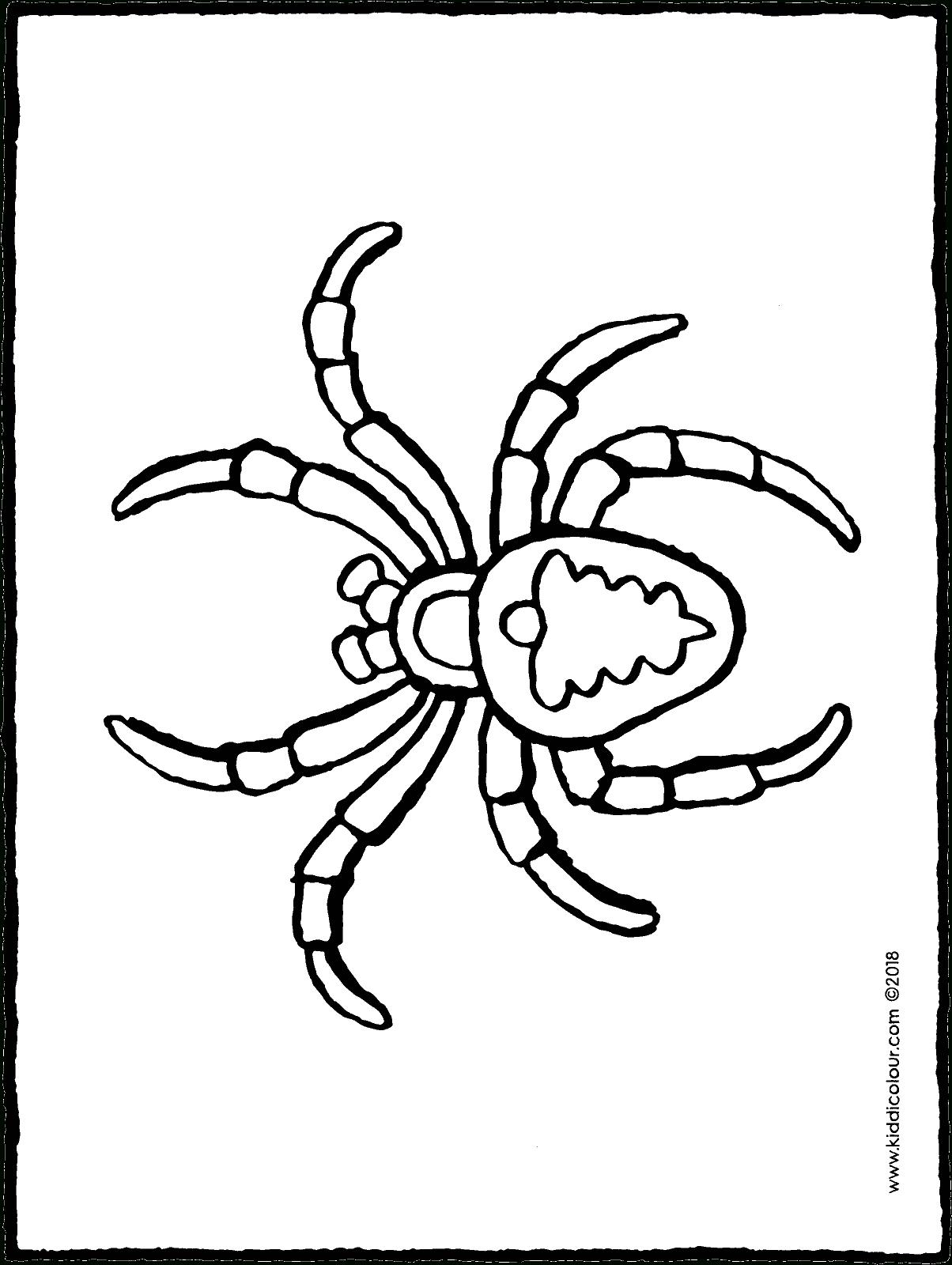 Araignée - Kiddicoloriage tout Dessiner Une Araignee