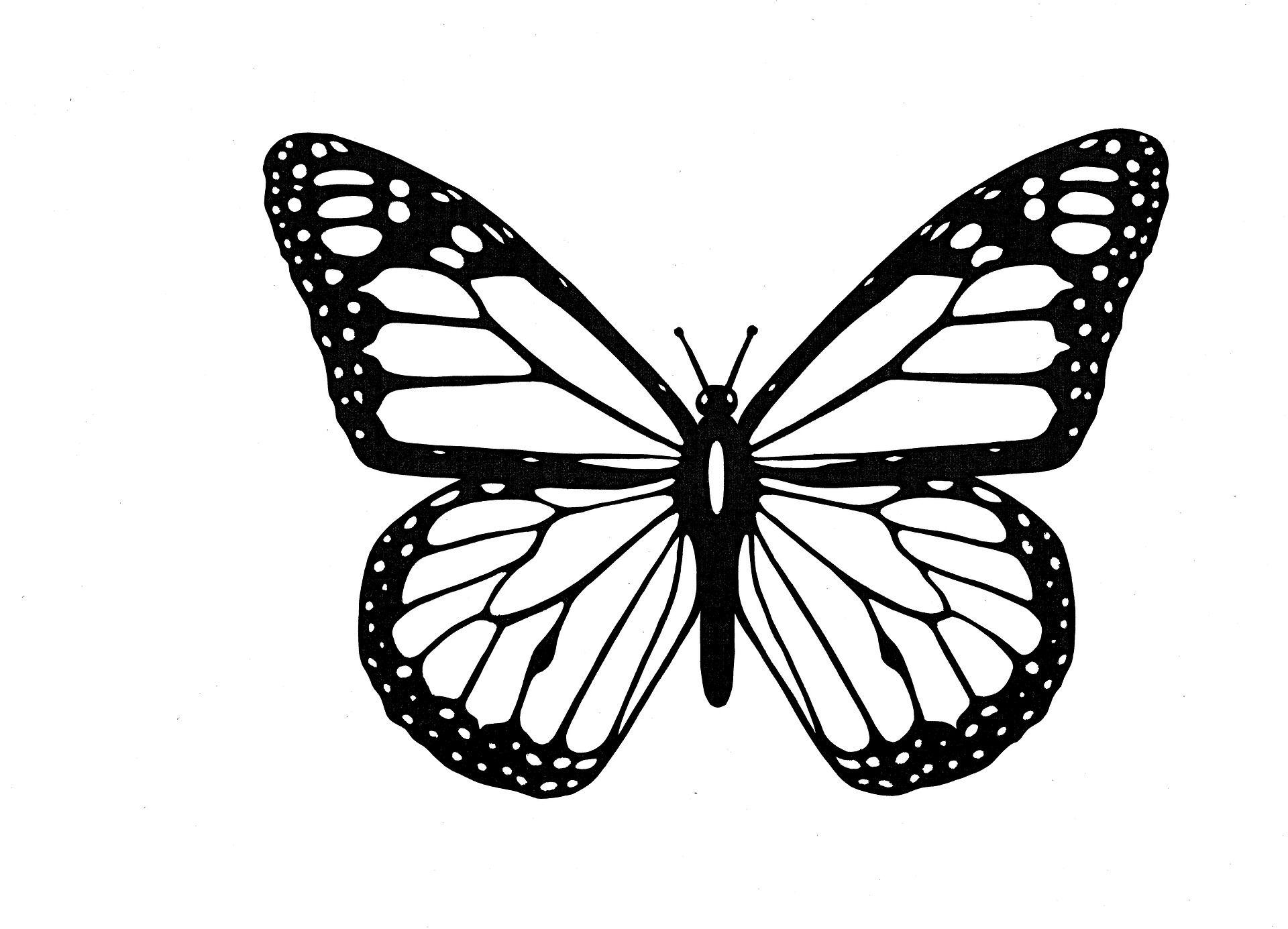 Artettuto- Coloriages Papillons À Imprimer. -Dessins De concernant Dessin A Imprimer Papillon Gratuit