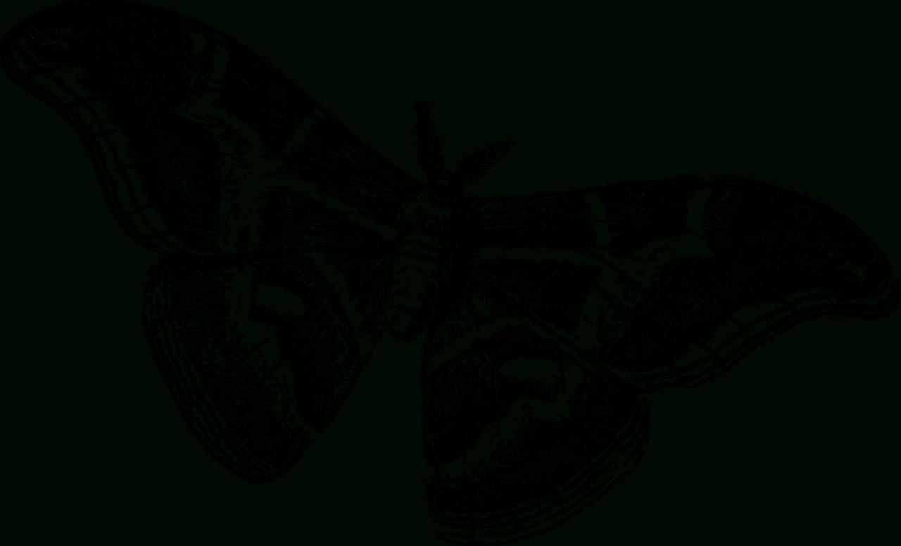 Artettuto- Coloriages Papillons À Imprimer. -Dessins De dedans Dessin A Imprimer Papillon Gratuit