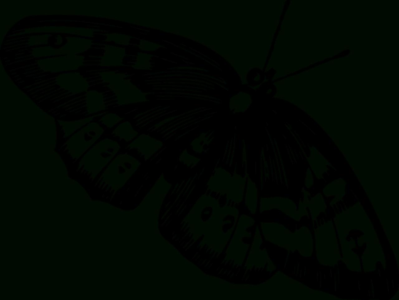 Artettuto- Coloriages Papillons À Imprimer. -Dessins De encequiconcerne Dessin A Imprimer Papillon Gratuit