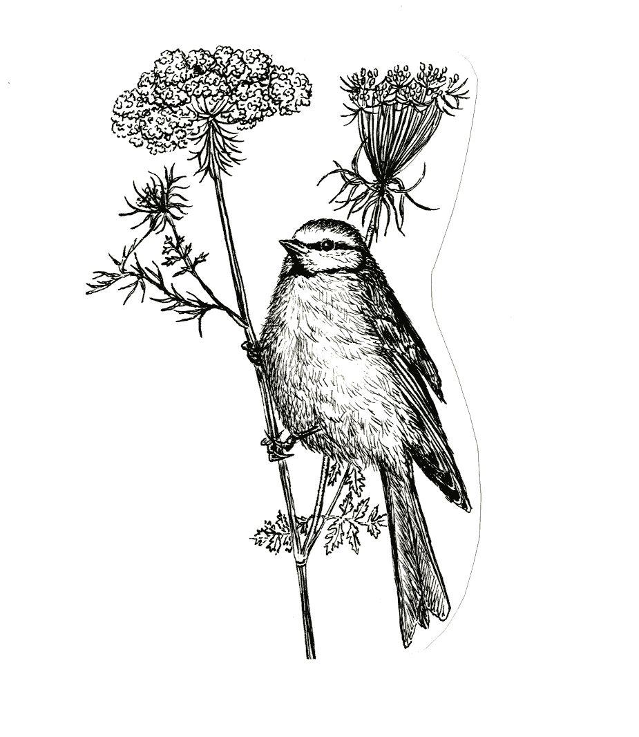 Association Oiseaux Nature | Accueillir La Biodiversité Chez Soi intérieur Dessin De Cage D Oiseau
