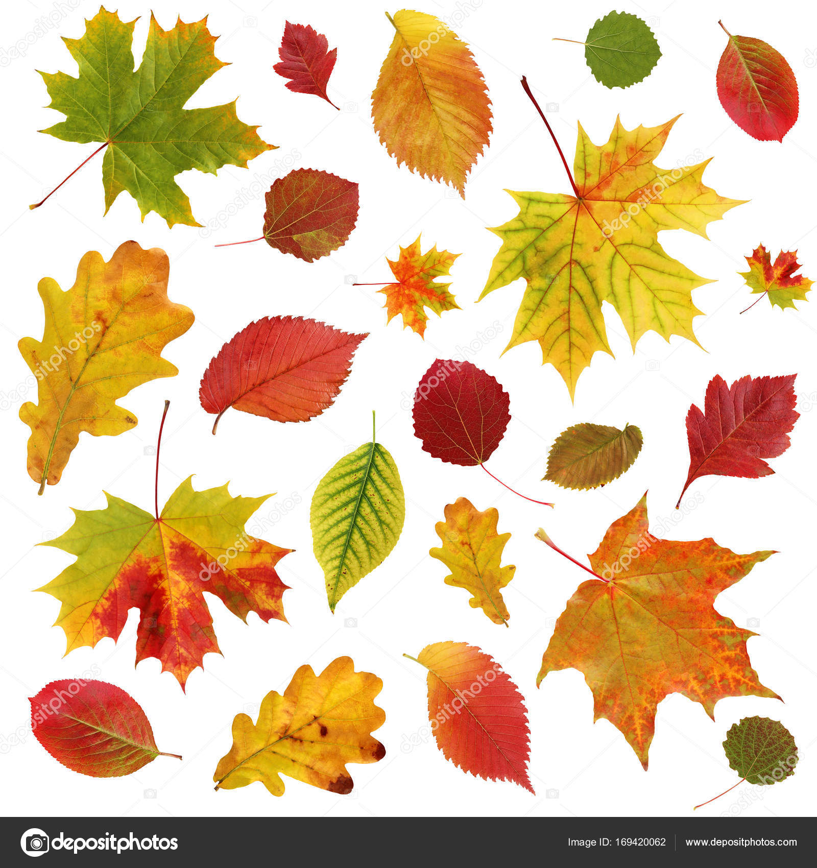 Background With Falling Autumn Leaves. — Stock Photo avec Dessin De Feuille D Automne