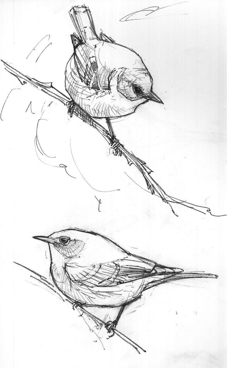 Birds On A Branch :) | Croquis D'oiseaux, Dessin Oiseau Et destiné Dessin D Oiseau Simple