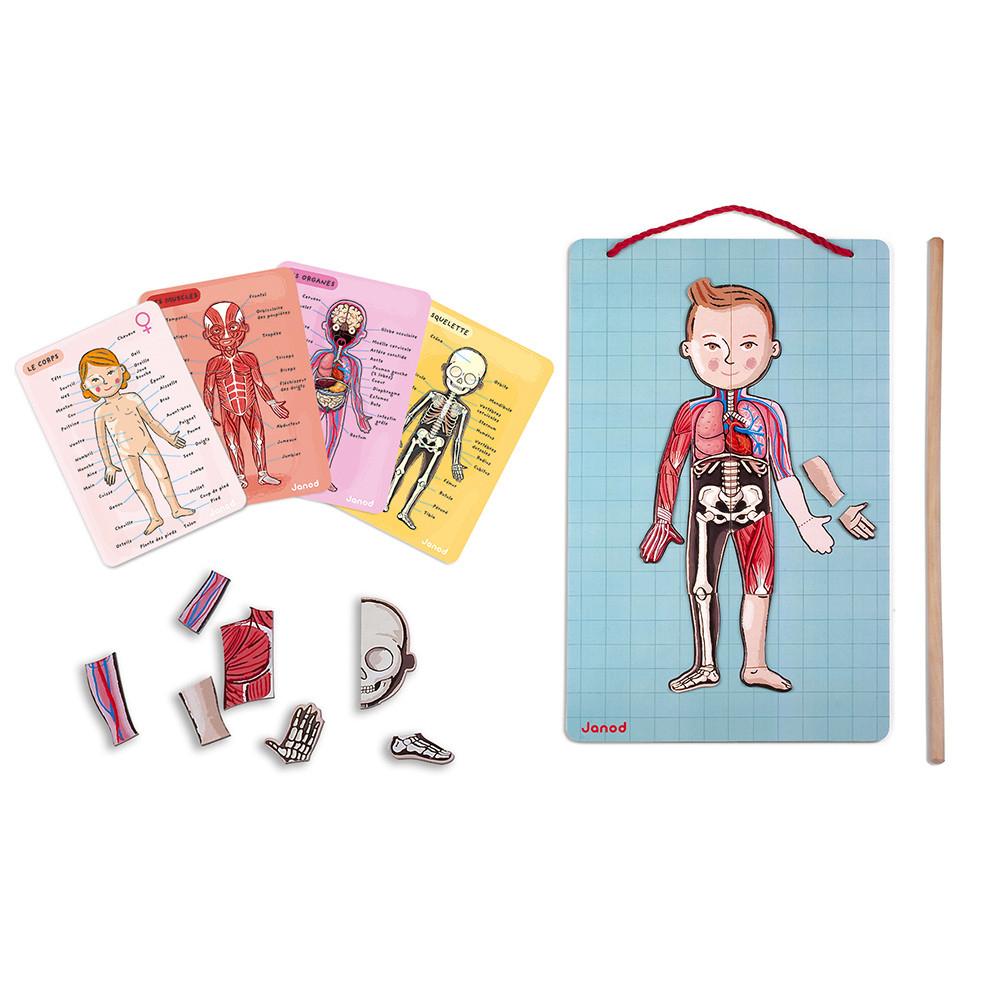 Body Magnet L'anatomie En Bois - 12 Langues dedans Jeux Educatif 4 5 Ans