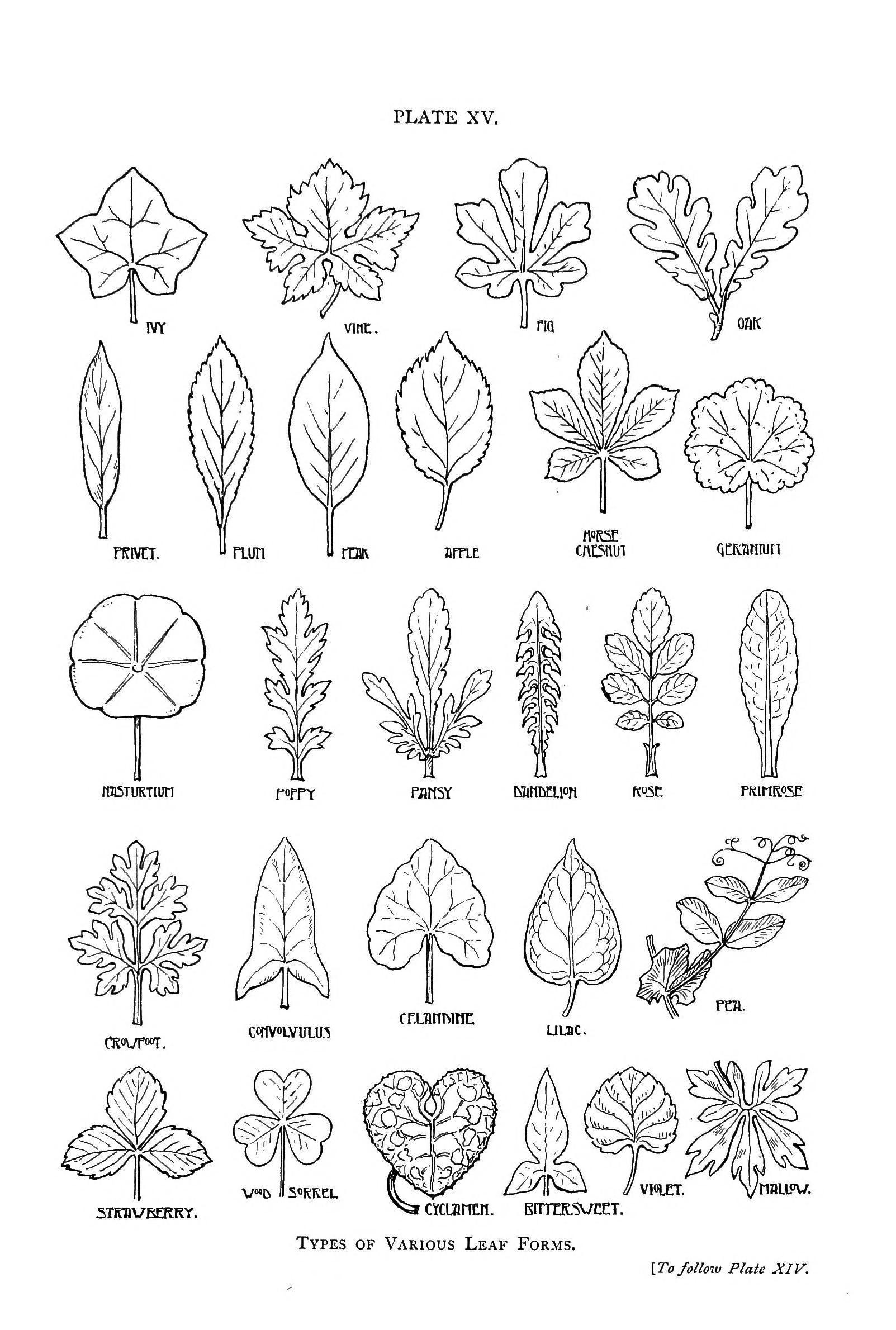 Botanical - Leaf - Shapes | Dessin Feuille, Dessin Arbre Et serapportantà Dessin De Feuille D Arbre À Imprimer