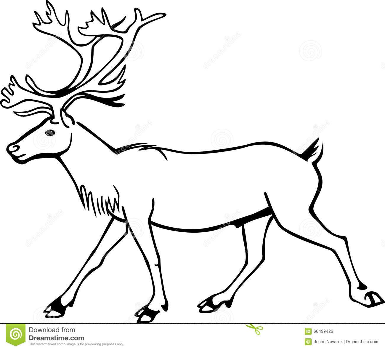 Caribou De Taureau Illustration De Vecteur. Illustration Du concernant Caribou Dessin