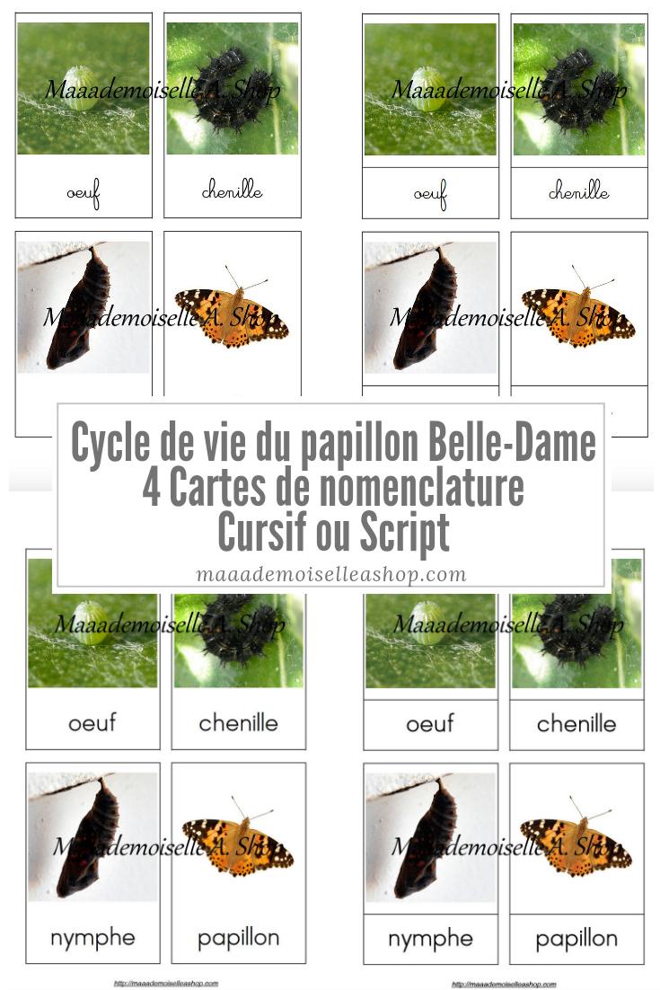 Cartes De Nomenclature – Cycle De Vie Du Papillon Belle-Dame pour Cycle De Vie D Une Chenille