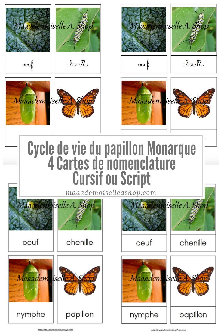 Cartes De Nomenclature - Cycle De Vie Du Papillon Monarque (4 Cartes +  Pochette De Rangement) avec Cycle De Vie D Une Chenille