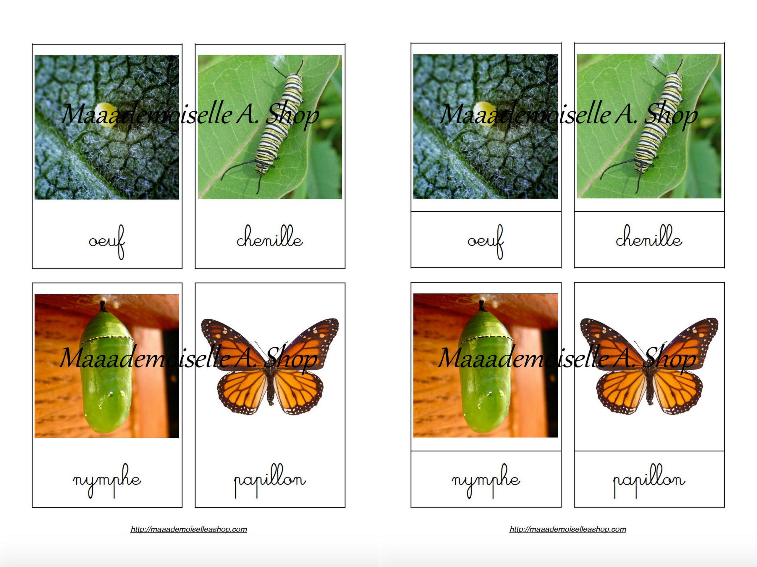 Cartes De Nomenclature - Cycle De Vie Du Papillon Monarque (4 Cartes +  Pochette De Rangement) intérieur Cycle De Vie D Une Chenille