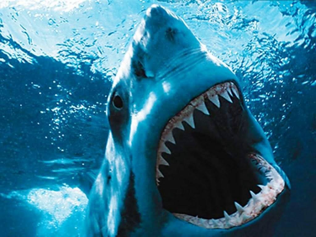 Ce Matin, Un Poisson, A Tué Un Pêcheur Sur Le Forum Blabla encequiconcerne Requin Jeux Video