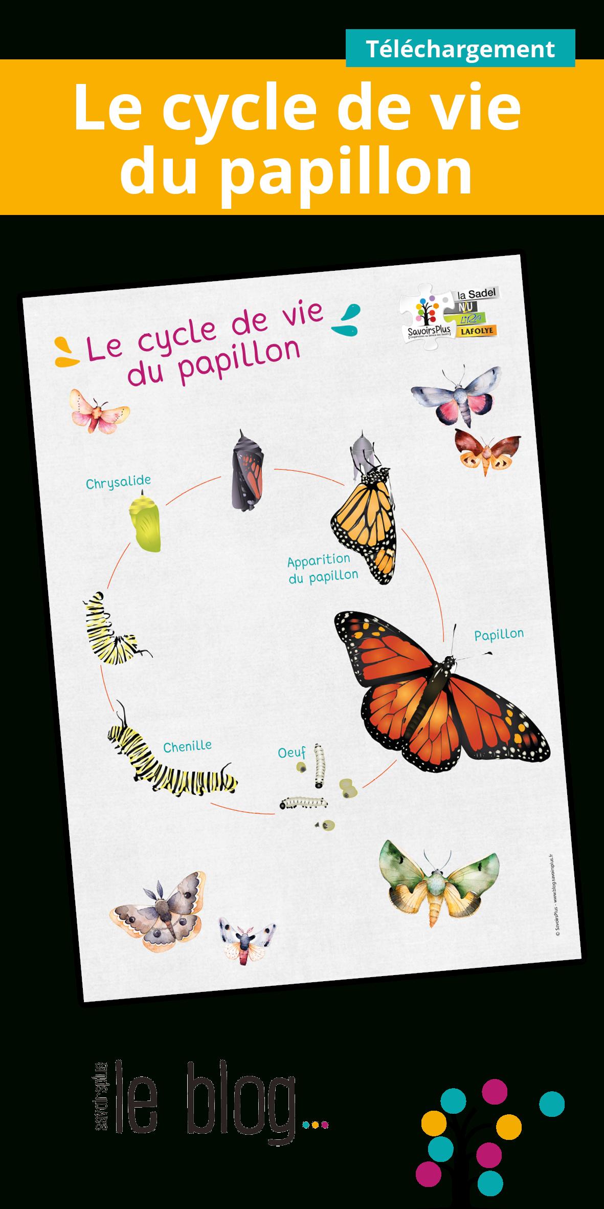 Chenille, Chrysalide, Papillon Téléchargez Et Imprimez serapportantà Cycle De Vie D Une Chenille