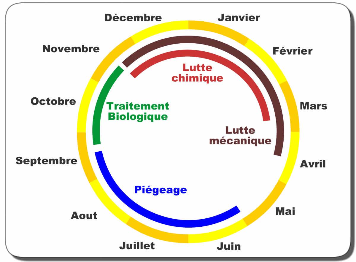 Chenille Processionnaire Du Pin : Biologie, Reproduction intérieur Cycle De Vie D Une Chenille