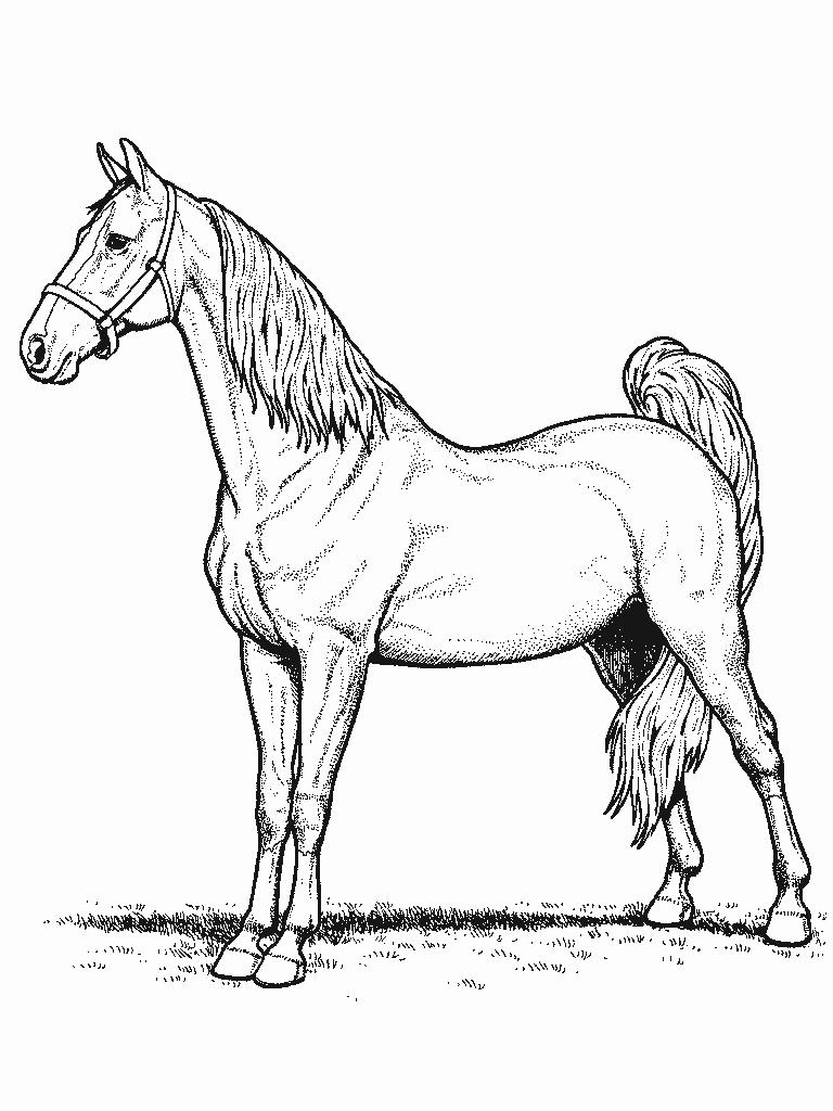 Cheval #21 (Animaux) – Coloriages À Imprimer serapportantà Dessin De Cheval A Colorier