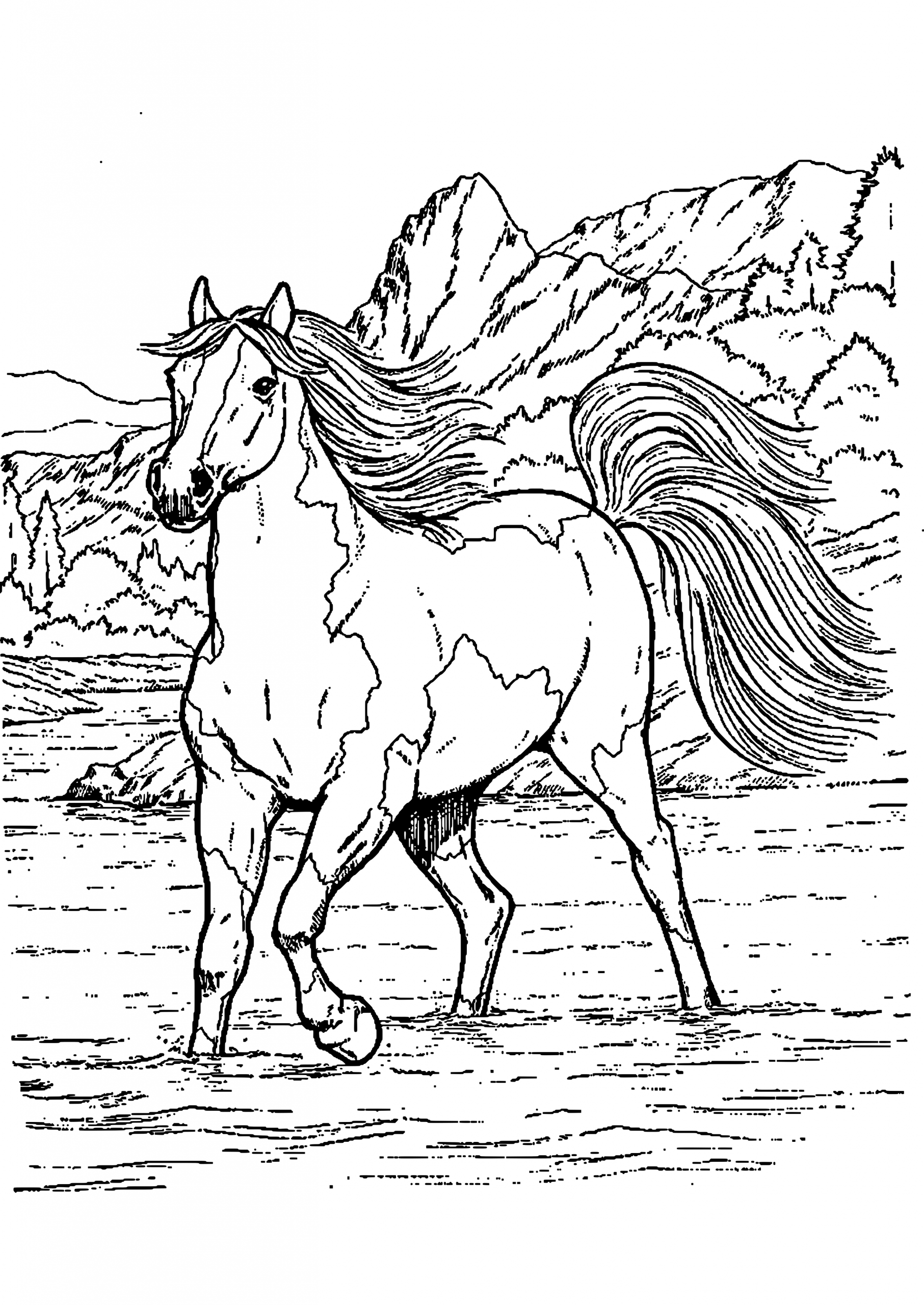 Chevaux | Coloriage Cheval, Coloriage Animaux, Coloriage destiné Image De Cheval A Colorier