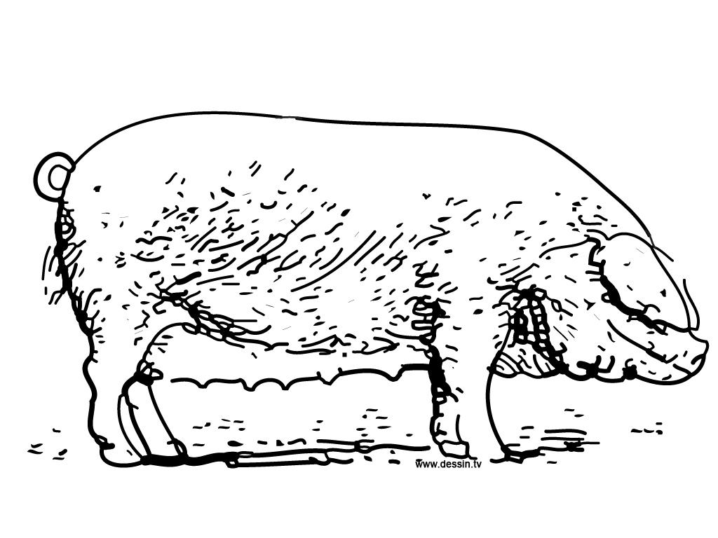 Cochon #105 (Animaux) – Coloriages À Imprimer avec Dessin A Colorier Cochon
