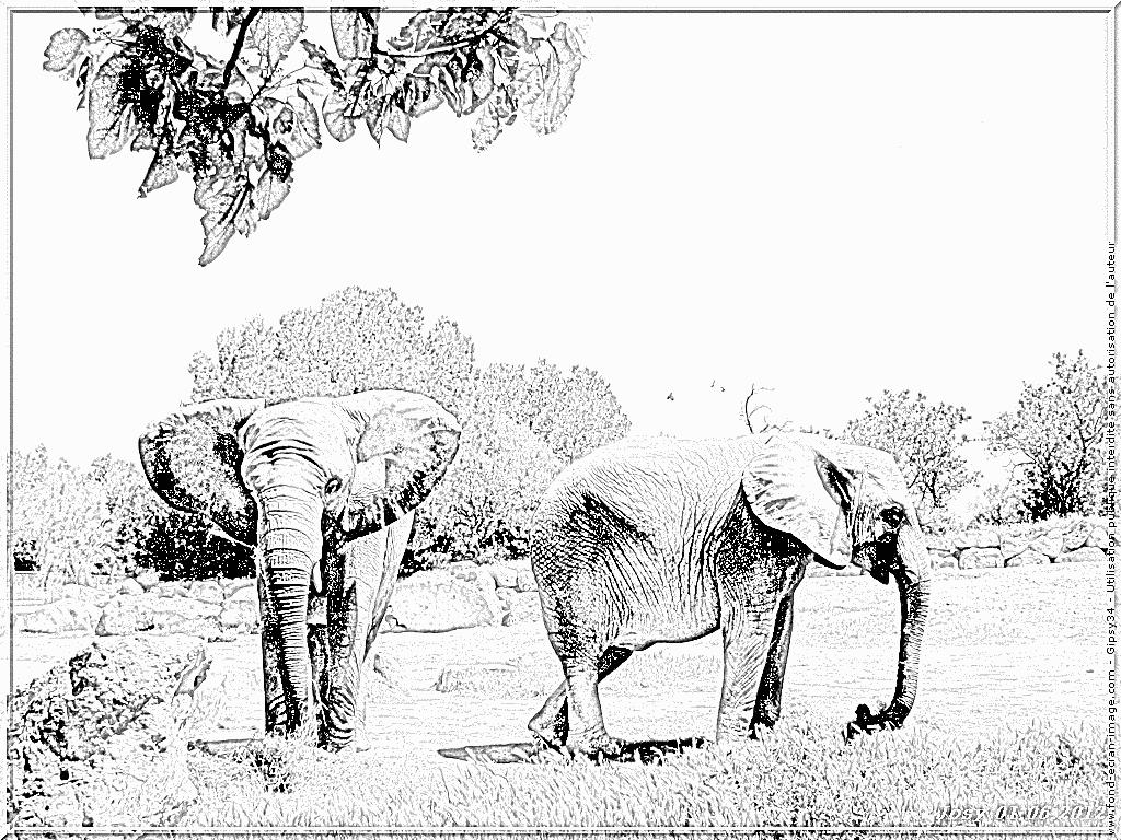 Coloriage 34 Elephants D Afrique À Imprimer Pour Les Enfants avec Coloriage Afrique À Imprimer