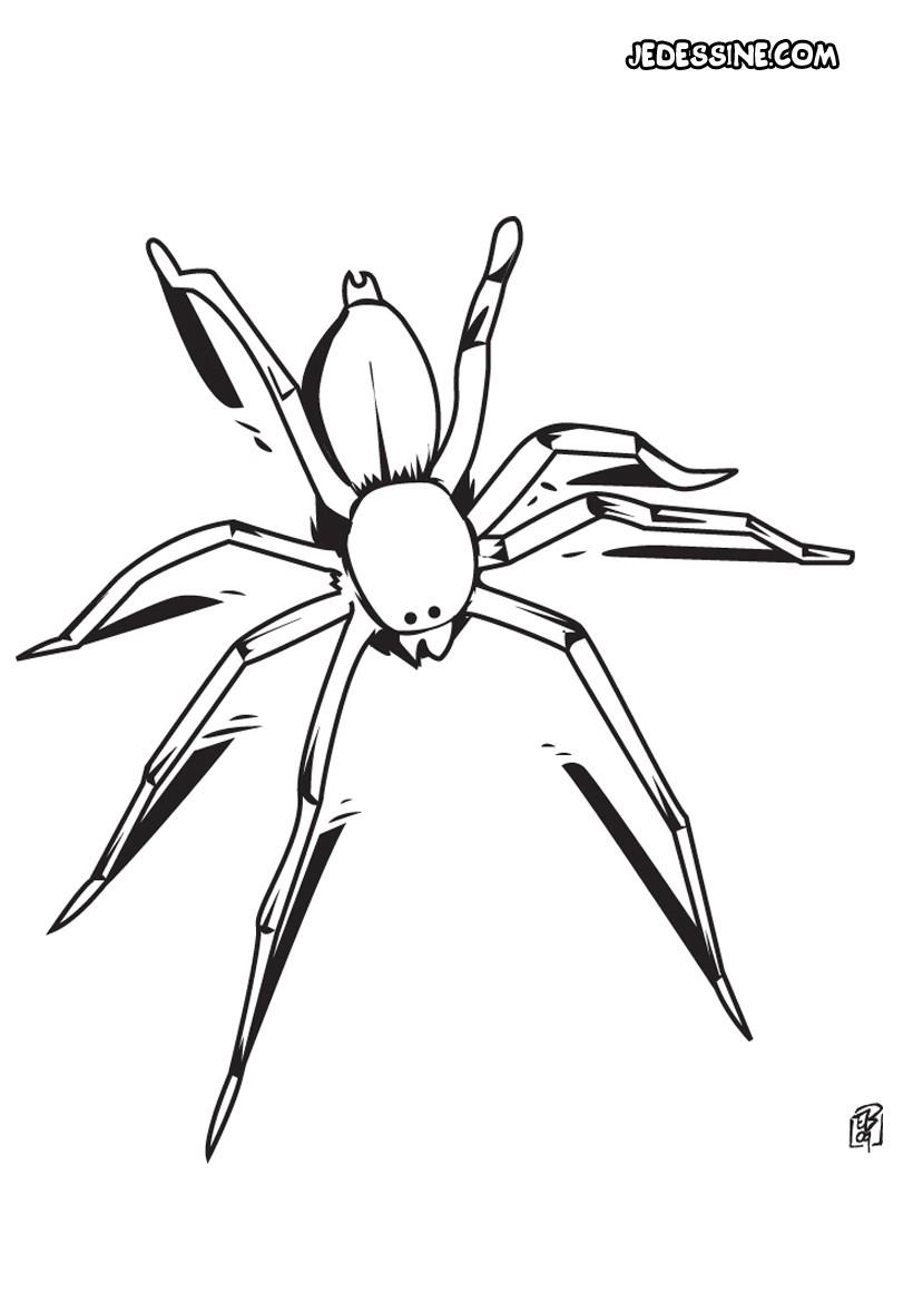 Coloriage À Dessiner Araignée Gratuit encequiconcerne Dessiner Une Araignee
