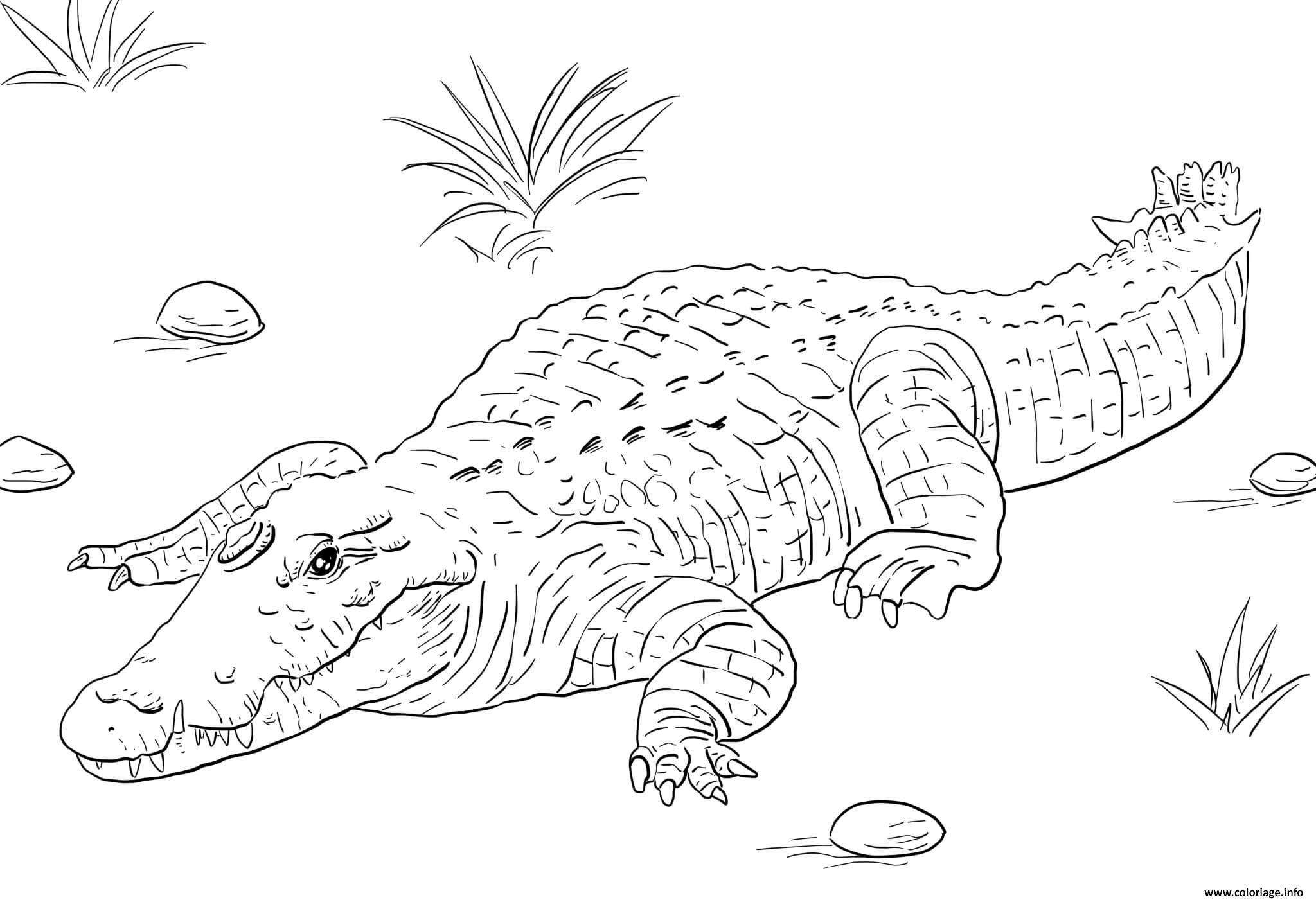 Coloriage Afrique Nile Crocodile Dessin destiné Coloriage Afrique À Imprimer