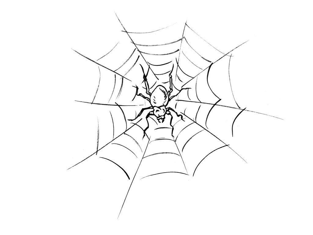 Coloriage Araignée 12 - Coloriage Araignees - Coloriages Animaux concernant Dessin Toile Araignée