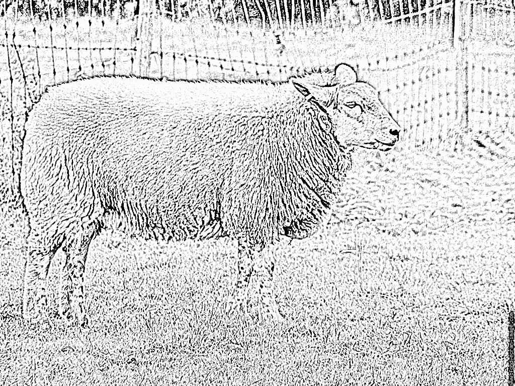 Coloriage Ardennes Mouton À Imprimer Pour Les Enfants - Dessin à Photo De Mouton A Imprimer