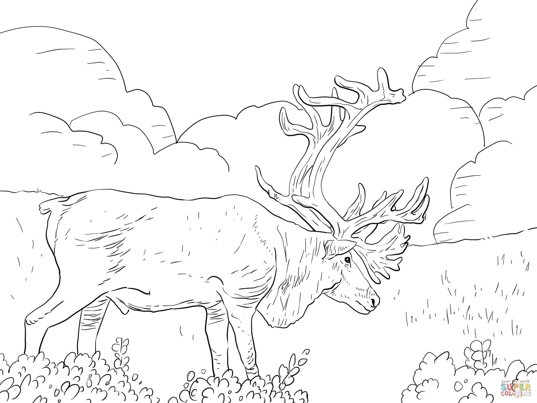 Coloriage - Caribou De Grant | Coloriages À Imprimer Gratuits destiné Caribou Dessin