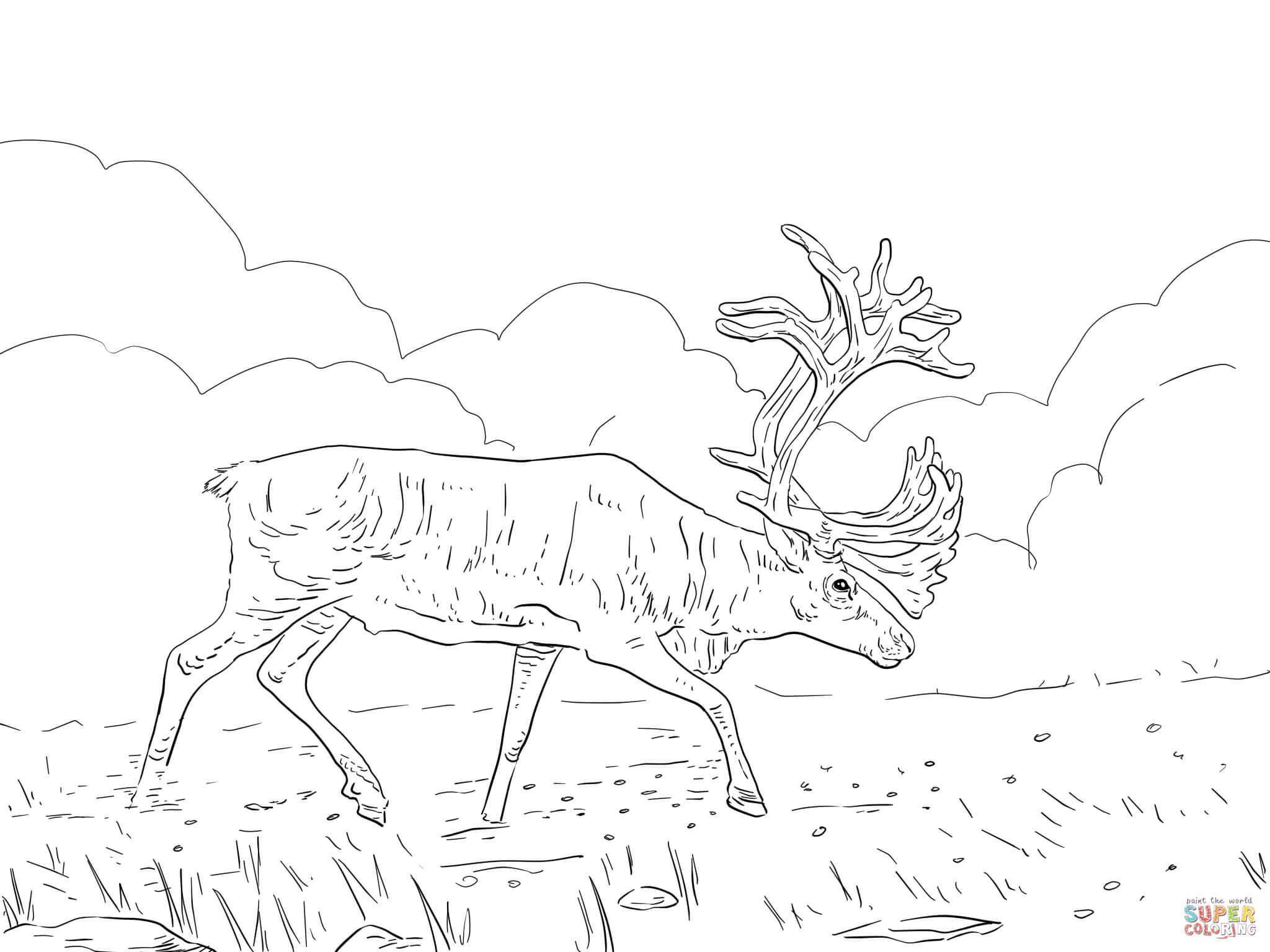 Coloriage - Caribou Des Bois | Coloriages À Imprimer Gratuits serapportantà Caribou Dessin