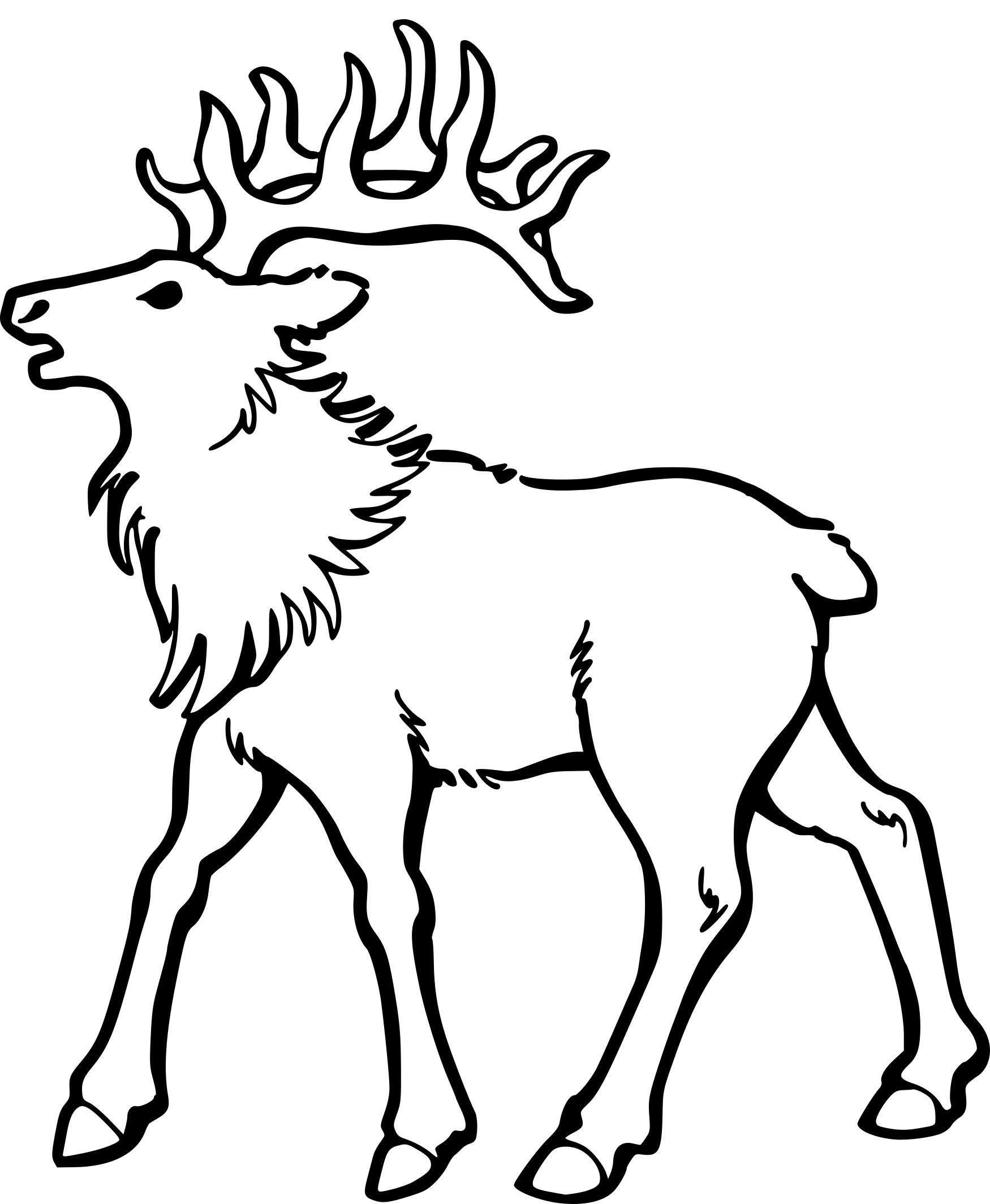 Coloriage Caribou Dessin À Imprimer Sur Coloriages intérieur Caribou Dessin