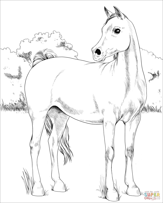 Coloriage - Cheval Arabe | Coloriages À Imprimer Gratuits dedans Image De Cheval A Colorier