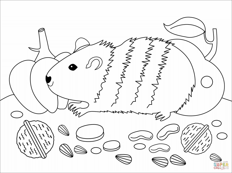 Coloriage - Cochon D'inde | Coloriages À Imprimer Gratuits concernant Dessin Cochon A Colorier