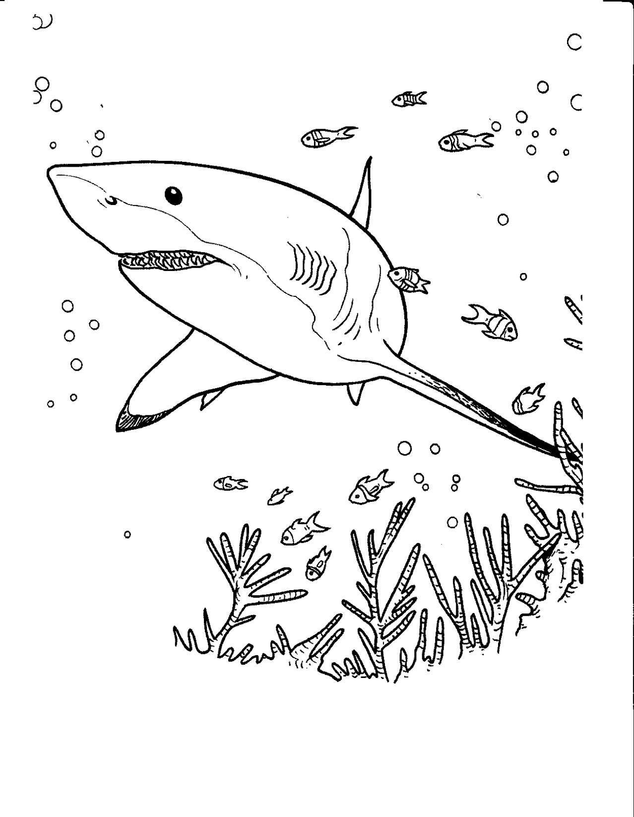 Coloriage De Requin À Colorier Pour Enfants - Coloriage De serapportantà Dessin De Requin À Imprimer