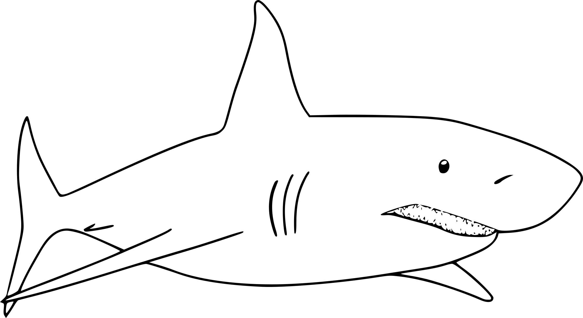 Coloriage De Requin À Imprimer Sur Coloriage De intérieur Dessin De Requin À Imprimer
